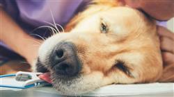 posgrado alteraciones nervios craneales sindrome vestibular epilepsia canina felina movimientos desorden involuntario