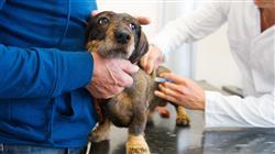 posgrado capacitacion urgencias veterinarias pequenos