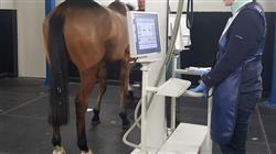 curso capacitacion ecografia pequenos animales