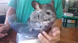 maestria online semipresencial medicina cirugia animales exoticos