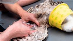 maestria semipresencial medicina cirugia animales exoticos