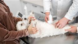 maestria semipresencial urgencias veterinarias