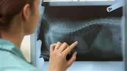 magister semipresencial urgencias veterinarias