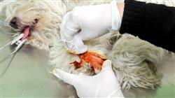 mejor master semipresencial urgencias veterinarias