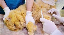 posgrado semipresencial urgencias veterinarias