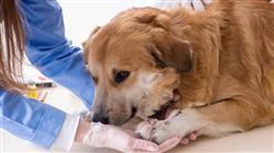 magister semipresencial traumatologia cirugia ortopedica veterinaria