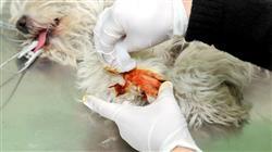 master semipresencial traumatologia cirugia ortopedica veterinaria