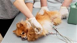 posgrado semipresencial cardiologia veterinaria pequenos animales