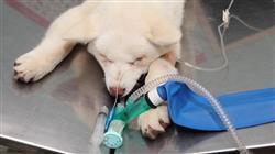 estudiar master semipresencial anestesiologia veterinaria