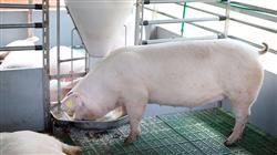 magister semipresencial nutricion animal