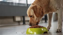 mejor master semipresencial nutricion animal