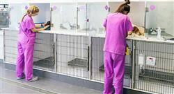 estudiar responsabilidad civil del perito veterinario