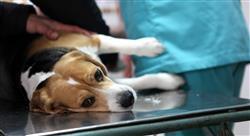 experto universitario responsabilidad civil del perito veterinario