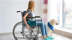 experto programas intervencion asistida animales