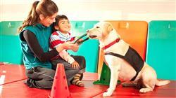 formacion programas intervencion asistida animales
