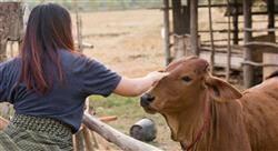 especializacion online pericia del maltrato animal