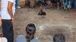 especializacion online pericia penal veterinaria