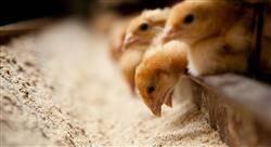 experto universitario pericia agroalimentaria y medioambiental veterinaria