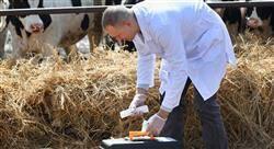 experto universitario pericia contencioso administrativa veterinaria