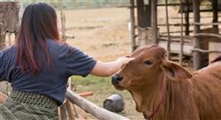 formacion pericia laboral veterinaria