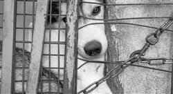 posgrado pericia laboral veterinaria