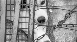 diplomado pericia forense y del maltrato animal