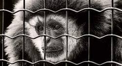 posgrado pericia forense y del maltrato animal