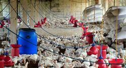 curso pericia agroalimentaria y medioambiental veterinaria