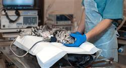 maestria anestesiología veterinaria