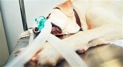 posgrado anestesiología veterinaria