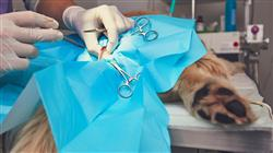 maestria urgencias veterinarias pequenos animales
