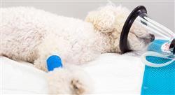 especializacion manejo de urgencias cardiorrespiratorias en pequeños animales