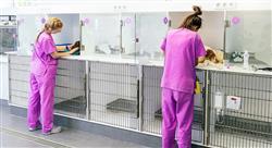 especializacion online manejo de urgencias cardiorrespiratorias en pequeños animales