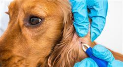 experto universitario manejo de urgencias dermatológicas y oftalmológicas en pequeños animales