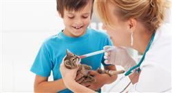 diplomado manejo de urgencias gastrointestinales en pequeños animales