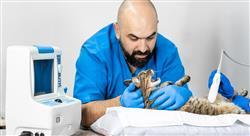 formacion manejo de urgencias gastrointestinales en pequeños animales