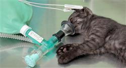 formacion manejo de urgencias hematológicas y oncológicas en pequeños animales