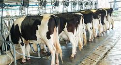 posgrado seguridad alimentaria veterinaria