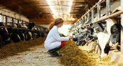 posgrado trazabilidad en industrias  alimentarias