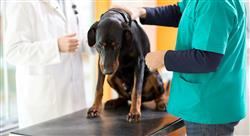 maestria traumatología y cirugía ortopédica veterinaria
