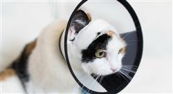 posgrado cirugía de cabeza y cuello en pequeños animales