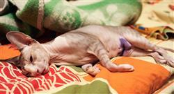 formacion manejo de heridas y cirugía reconstructiva en pequeños animales