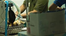 estudiar cirugia basica tejidos blandos