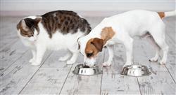 experto universitario nutrición y alimentación de caninos y felinos