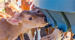 formacion nutrición y alimentación animal