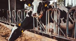 posgrado nutrición y alimentación animal