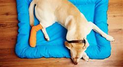 curso manejo de urgencias neurológicas conductuales y ortopédicas en pequeños animales