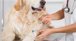 formacion manejo de urgencias neurológicas conductuales y ortopédicas en pequeños animales