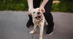 posgrado manejo de urgencias neurológicas conductuales y ortopédicas en pequeños animales