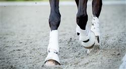 master rehabilitacion equin